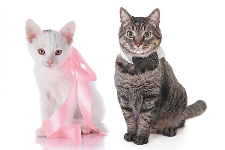 kediler kanama görürü mü