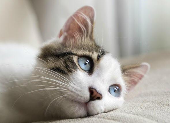 kedi hastalıkları belirtileri
