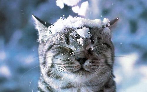 Kediler soğukta üşür mü