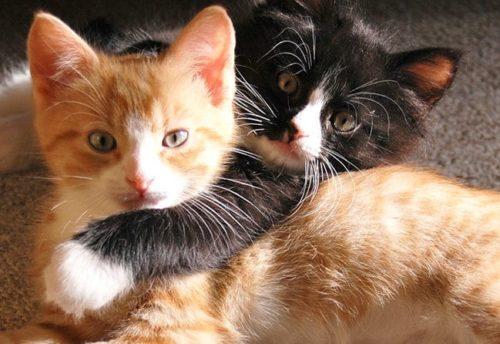 yerli kedi isimleri