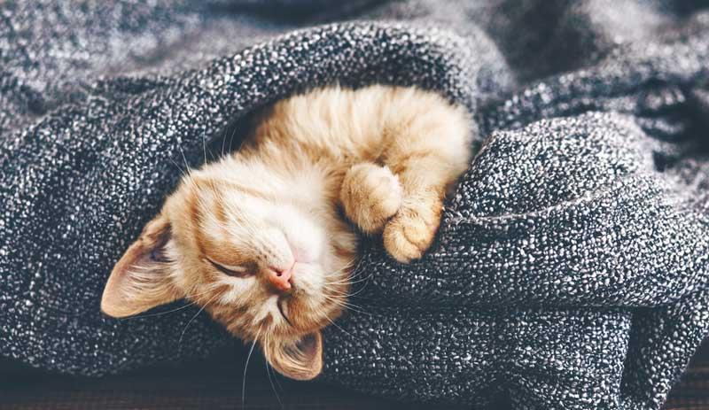 kedilerin yaşam süresi