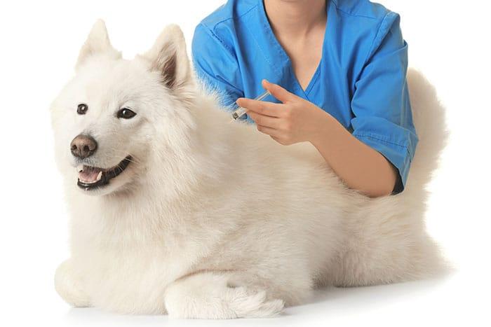 köpek aşıları nelerdir