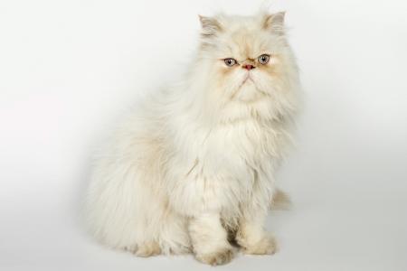 iran kedileri