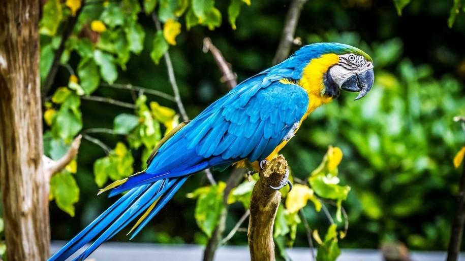 papağan özellikleri