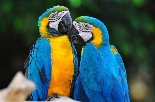 papağan isimleri