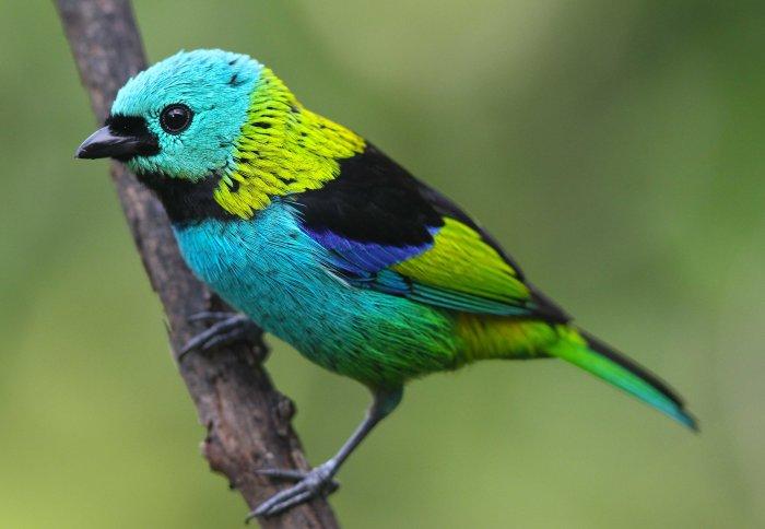 muhabbet kuşları ne yer