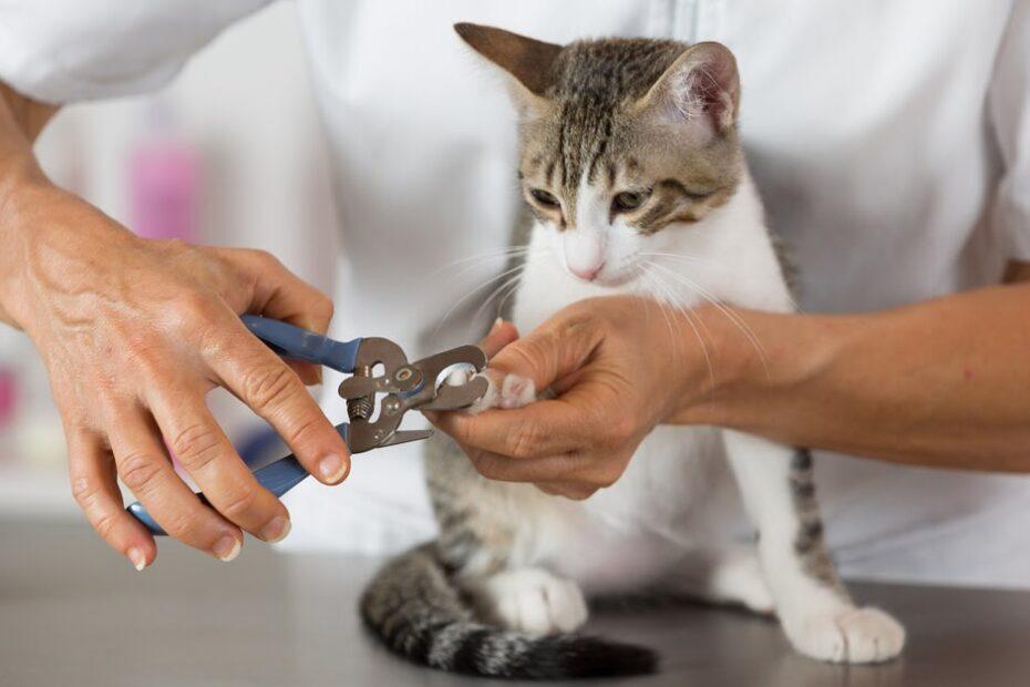 kedi tırnağı