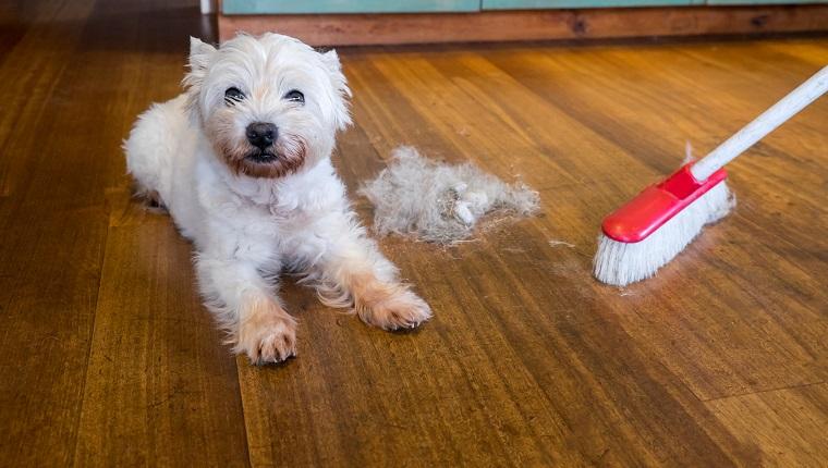 köpeklerde tüy dökme nedenleri